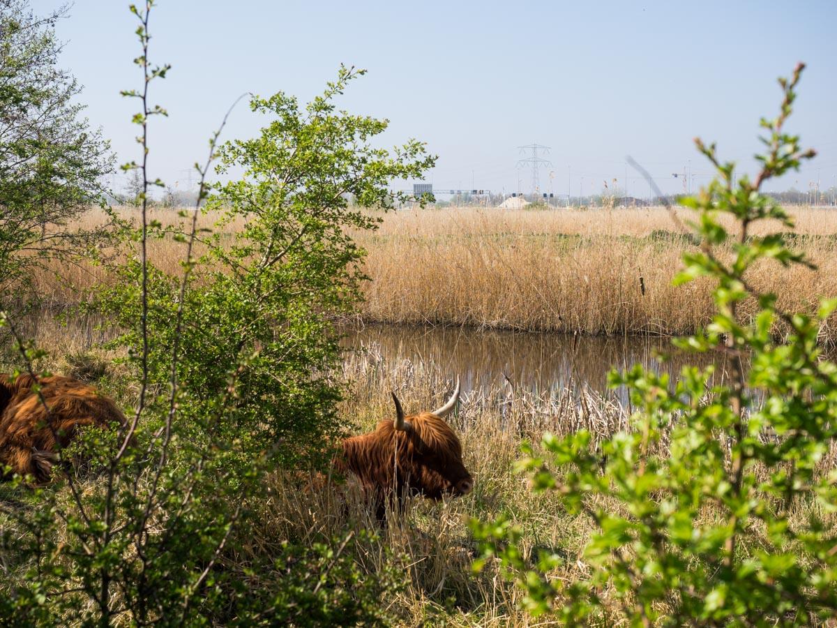 Wildlife in het Kromslootpark