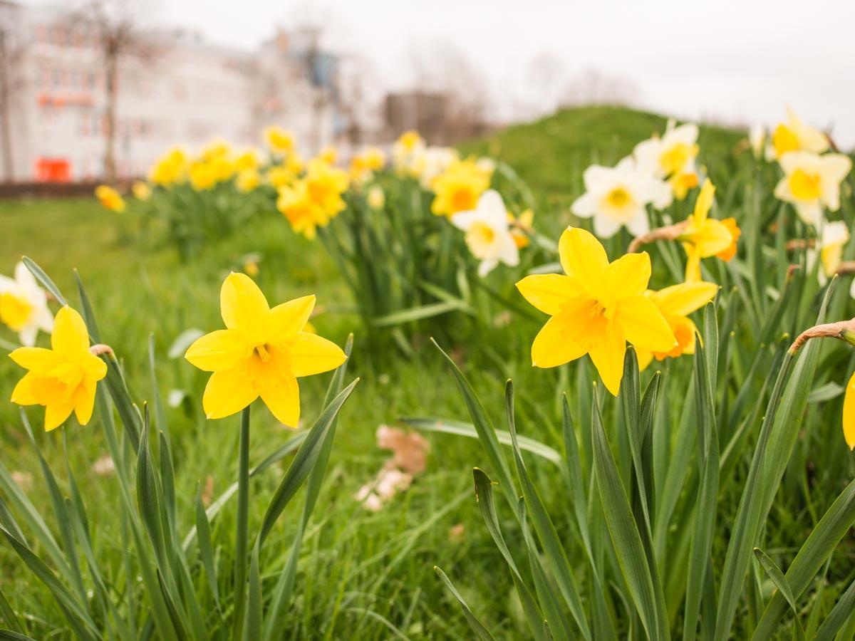 Toch nog het lente gevoel